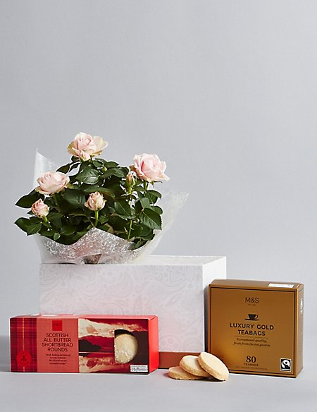 Shortbread Biscuits, Luxury Tea & Rose Plant Hamper (Available until 2nd May)