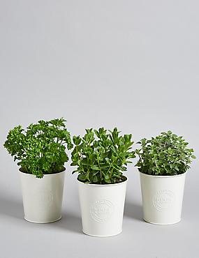 Windowsill Herb Trio
