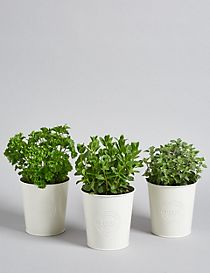 Windowsill Herb Trio