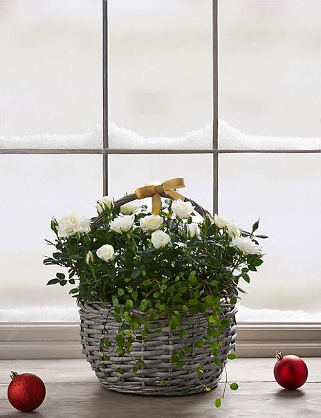 Festive White Rose Basket