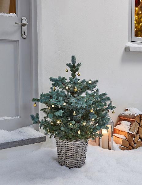 Doorstep Real Christmas Tree