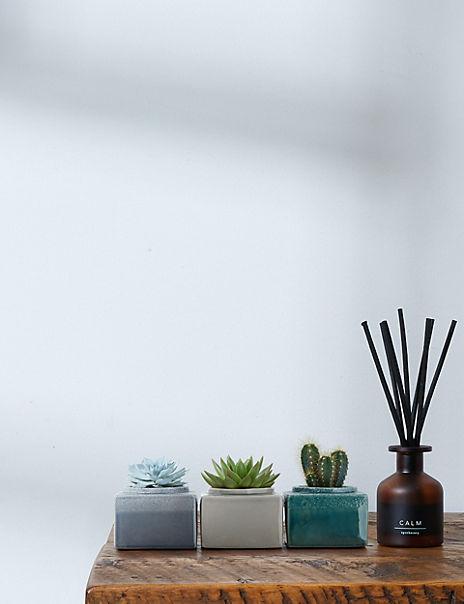 Cacti & Succulent Trio