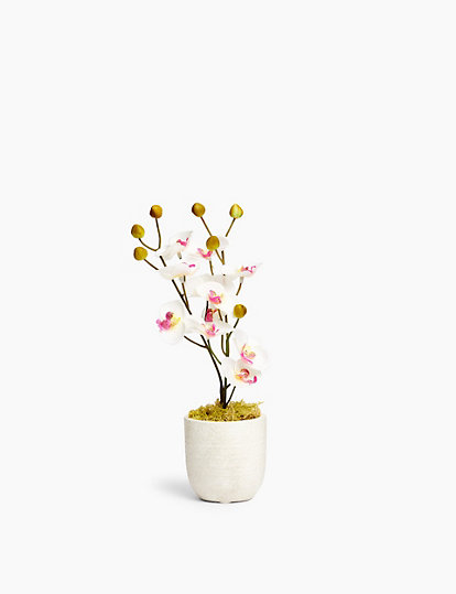 Mini Orchid Concrete Pot Artificial Flowers Marks And Spencer Us