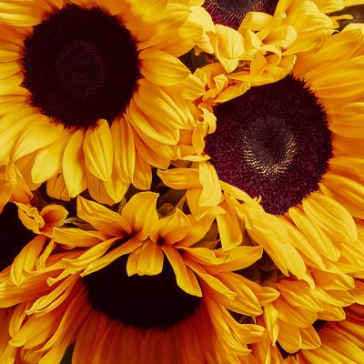 £5 off our British sunflower bouquet