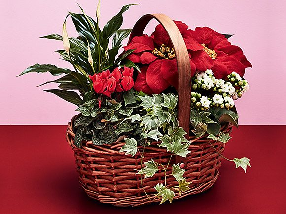 Poinsetta flower arrangement in a basket
