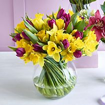 A 100-stem purple tulip and yellow daffodil bouquet